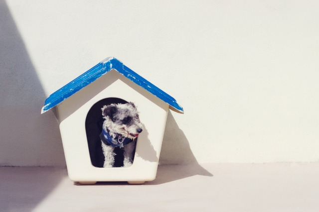 Considering adding a pet to your family? It's important to understand all the costs involved (spoiler: they're not cheap!)