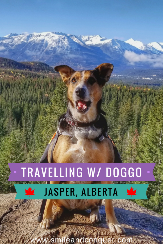 Jasper Road Trip with a Tag-a-long Pup